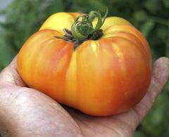 Tomatenpaket Riesig - Samen  – Bild 1