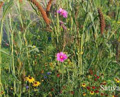 Blumenmischung Bauerngarten - Samen  – Bild 1
