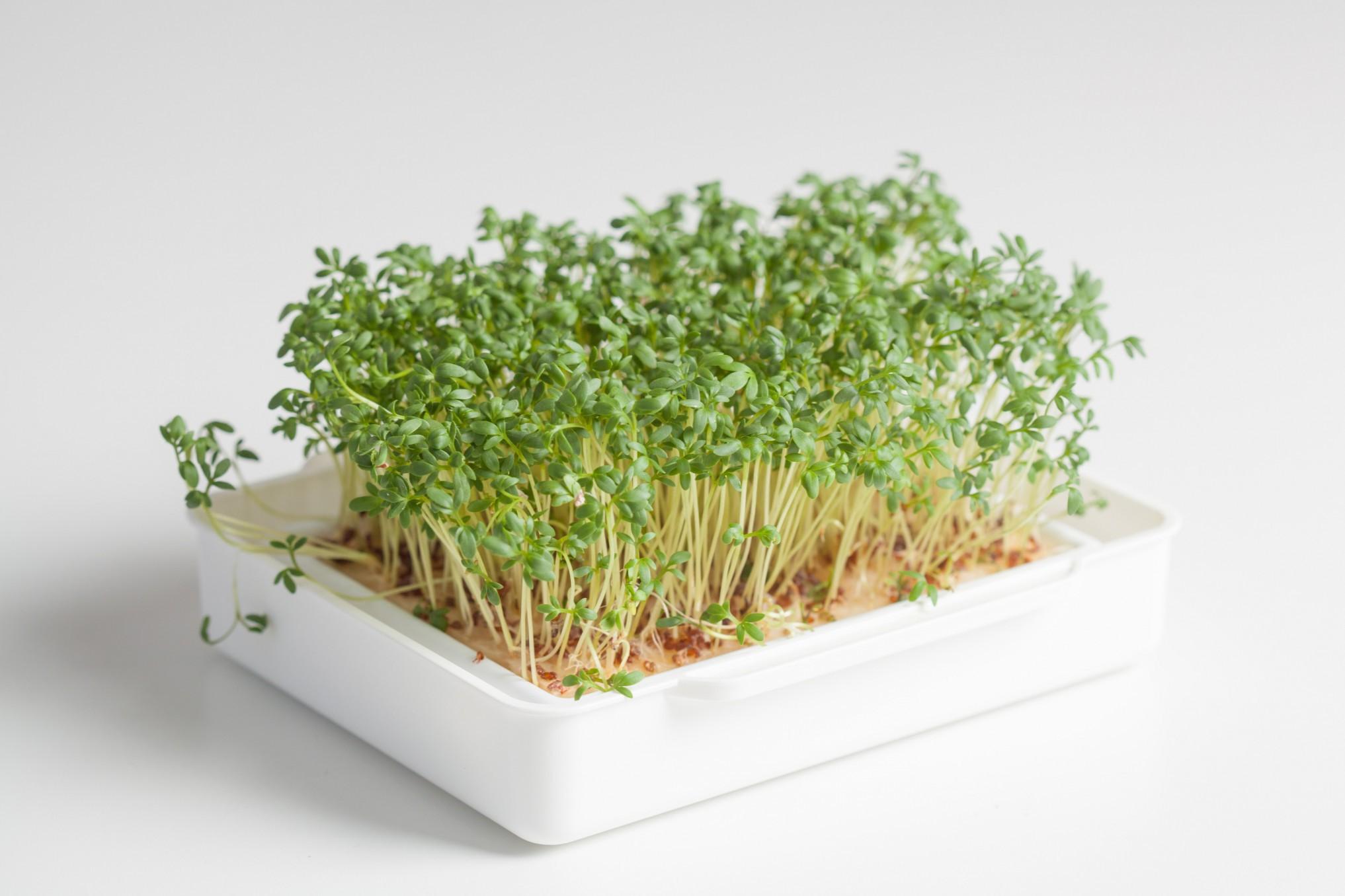 Cressbar® Starterkit weiß - 3 Cressbar Kresseschalen mit 24 Cresspads aus Gartenkresse, Radieschen, Rucola, Senf Bild 6