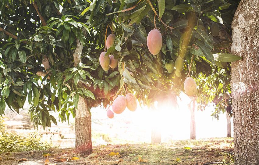 Mango Couchtisch
