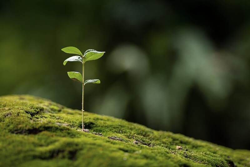 DELIFE steht für Nachhaltigkeit