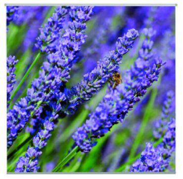 Outdoor Textilposter Lavendula Lavendel Poster aus Stoff ca 95 x 95 cm