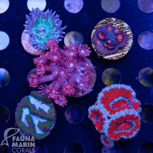 FMC LPS Pack: 5 LPS-Frags in the mix – image 1