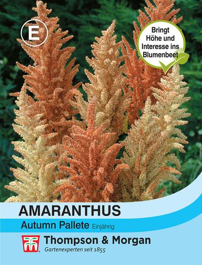 Fuchsschwanz (Amaranthus) Autumn Pallet | Fuchsschwanzsamen von Thompson & Morgan