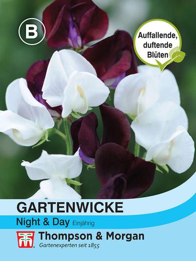 Gartenwicke Night & Day | Gartenwickesamen von Thompson & Morgan