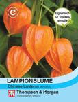 Lampionblume Physalis gigantea | Lampionblumesamen von Thompson & Morgan [MHD 01/2019]
