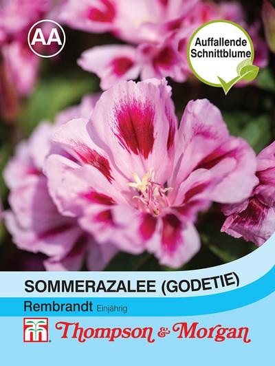 Sommerazalee Godetia Rembrandt | Sommerazaleesamen von Thompson & Morgan
