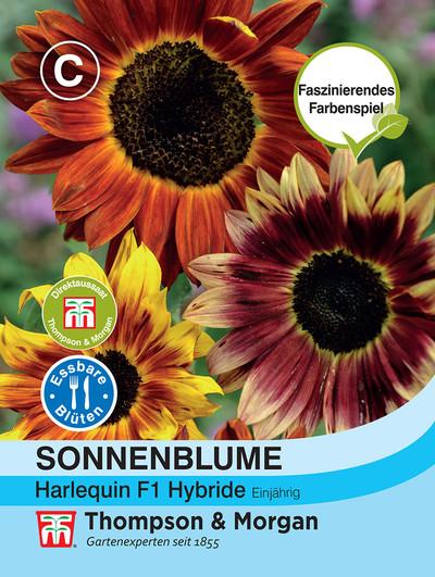 Sonnenblume Harlequin F1 Hybride | Sonnenblumensamen von Thompson & Morgan