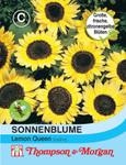 Sonnenblume Lemon Queen von Thompson & Morgan