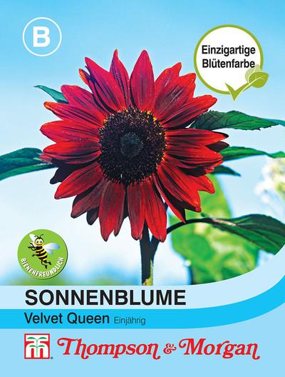 Sonnenblume Velvet Queen | Sonnenblumensamen von Thompson & Morgan