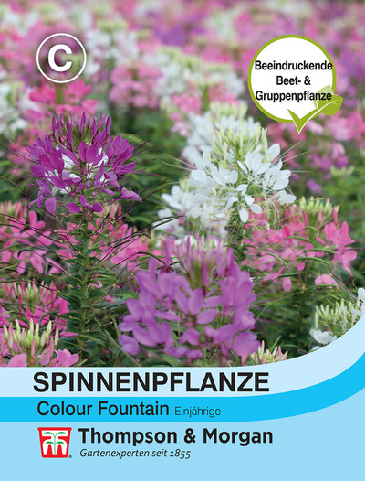 Spinnenblume Colour Fountain Mischung | Spinnenblumensamen von Thompson & Morgan
