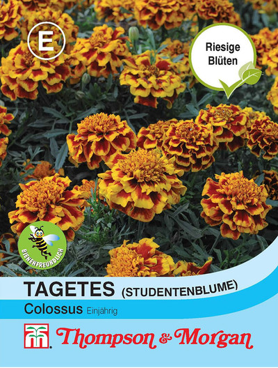 Studentenblume Colossus von Thompson & Morgan [MHD 01/2019]