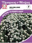 Wildblume Edelweiss von Thompson & Morgan [MHD 01/2019]