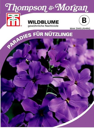 Wildblume Gewöhnliche Nachtviole   Wildblumensamen von Thompson & Morgan