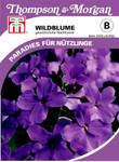 Wildblume Gewöhnliche Nachtviole von Thompson & Morgan