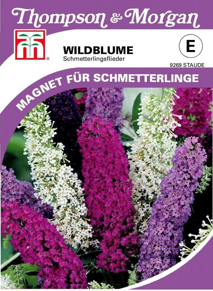 ca Schmetterlingsflieder Wildblume 75 Samen 9269 Buddleja davidii