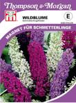 Wildblume Sommerflieder | Wildblumensamen von Thompson & Morgan
