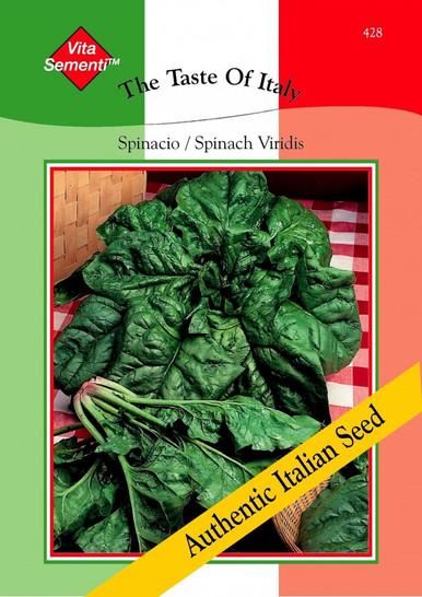 Spinatsamen - Spinat - Spinacio Viridis von Thompson & Morgan