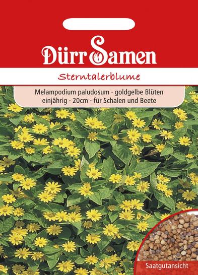 Sterntalerblume | Sterntalerblumensamen von Dürr Samen