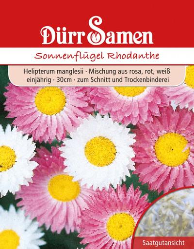 Sonnenflügel Rhodanthe | Sonnenflügelsamen von Dürr Samen