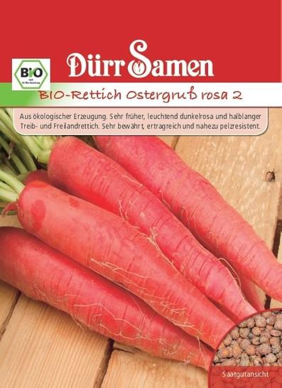 Rettich Ostergruß 2 rosa | Bio-Rettichsamen von Dürr Samen