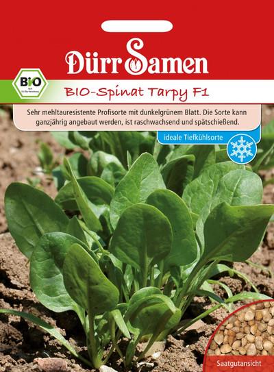 Spinat Tarpy F1   Bio-Spinatsamen von Dürr Samen