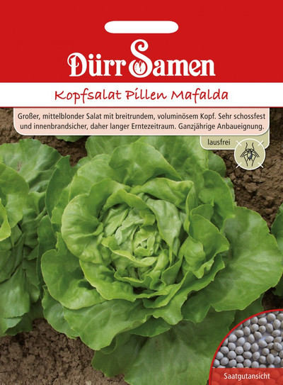 Kopfsalat Pillen Mafalda | Kopfsalatsamen von Dürr Samen