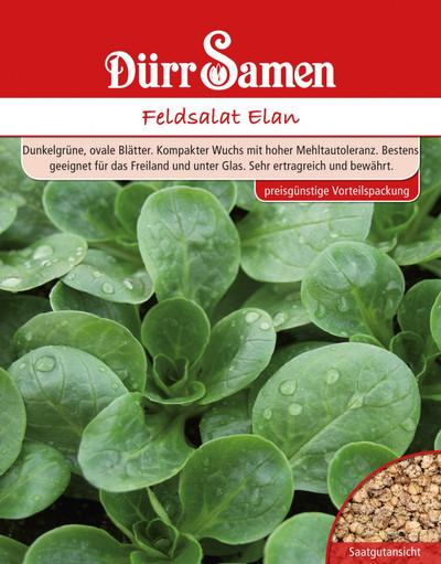 Feldsalat Elan Großpackung 250 g  | Feldsalatsamen von Dürr Samen
