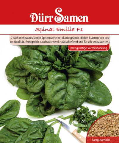 Spinat Emilia F1 250 g | Spinatsamen von Dürr Samen