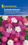 Schleifenblume Iberis Feenmischung von Kiepenkerl [MHD 01/2020]
