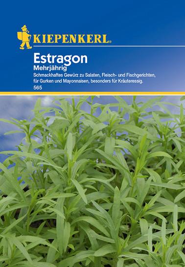 Estragon Mehrjährig | Estragonsamen von Kiepenkerl
