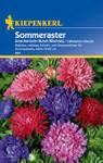 Sommeraster Amerikanische Buschmischung | Sommerastersamen von Kiepenkerl