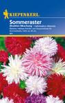 Sommeraster Strahlenmischung | Sommerastersamen von Kiepenkerl