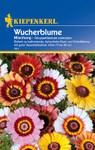 Wucherblume Mischung | Wucherblumensamen von Kiepenkerl
