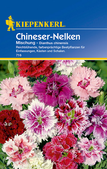 Chineser-Nelken Mischung | Chineser-Nelkensamen von Kiepenkerl