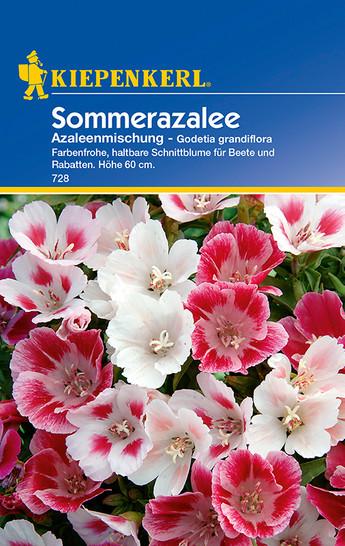 Sommerazalee Azaleenmischung | Sommerazaleensamen von Kiepenkerl