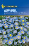 Alpenaster Hellblau | Alpenastersamen von Kiepenkerl