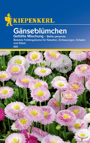 Gänseblümchen Gefüllte Mischung | Gänseblümchensamen von Kiepenkerl