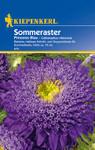 Sommeraster Prinzess Blau von Kiepenkerl [MHD 01/2020]