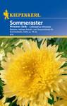 Sommeraster Prinzess Gelb von Kiepenkerl