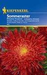 Sommeraster Prinzess Feuerrot | Sommerasternsamen von Kiepenkerl