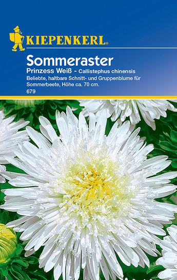 Sommeraster Prinzess Weiß | Sommerasternsamen von Kiepenkerl