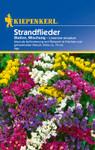Strandflieder Statice Mischung | Strandfliedersamen von Kiepenkerl