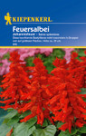 Feuersalbei Johannisfeuer | Feuersalbeisamen von Kiepenkerl