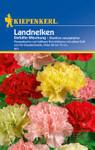 Landnelke Gefüllte Mischung | Landnelkensamen von Kiepenkerl