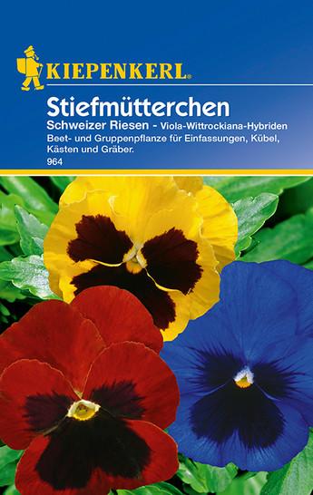 Stiefmütterchen Schweizer Riesen | Stiefmütterchensamen von Kiepenkerl