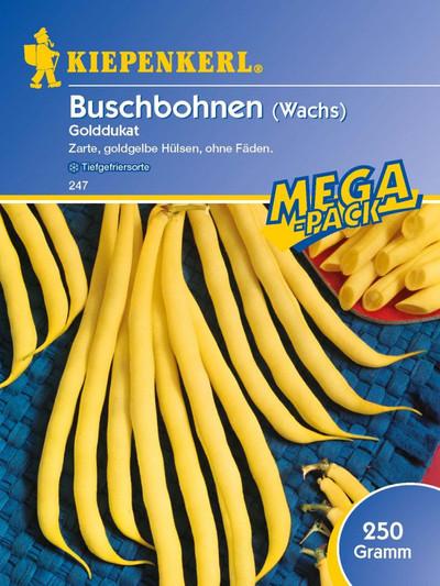 Bohnen - BuschBohnen - Golddukat (200g) von Kiepenkerl