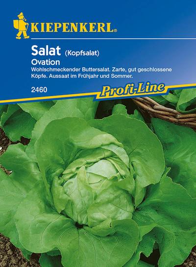 Salatsamen - Kopfsalat Ovation von Kiepenkerl