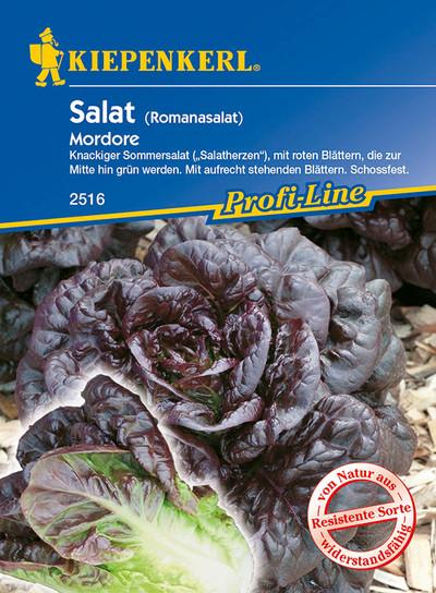 Salatsamen - Salat Modore von Kiepenkerl