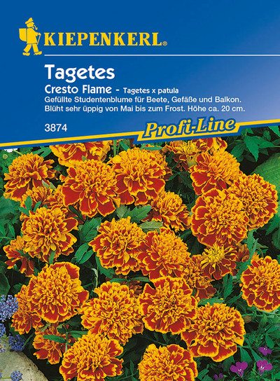 Tagetes Cresto Flame (Studentenblume) von Kiepenkerl [MHD 01/2020]